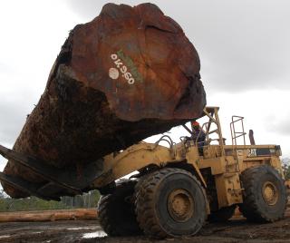 Aserradero de madera certificada con el sello FSC en Camerún (Foto C.Á.)