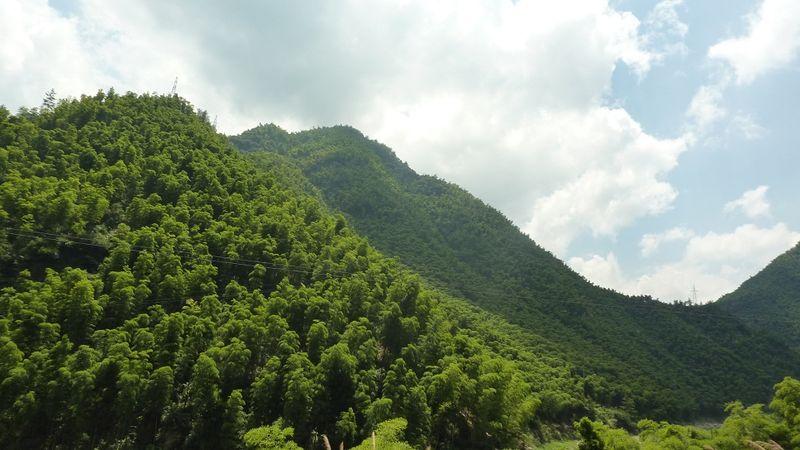 Horizonte de bambú 1