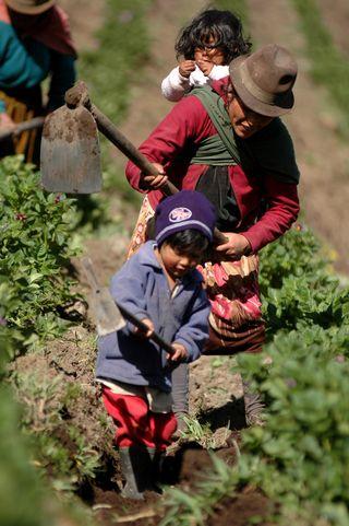 Campesinos en Ecuador (Copyright: Ricardo Landetta/Intermón Oxfam)