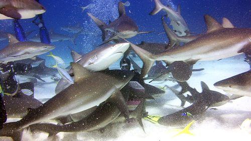 Dejad a los tiburones
