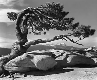 Ansel-adams-yosemite