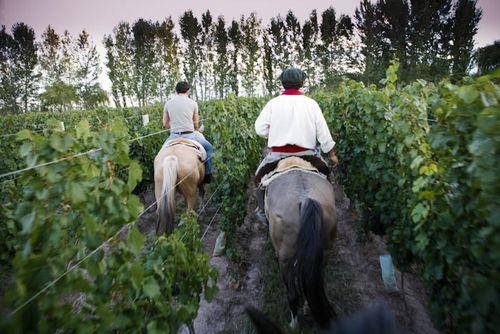 Hacer en Mendoza (caballo)
