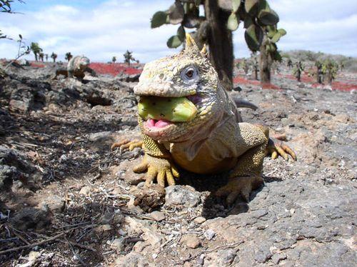 Galápagos 3