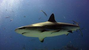 Depre tiburones
