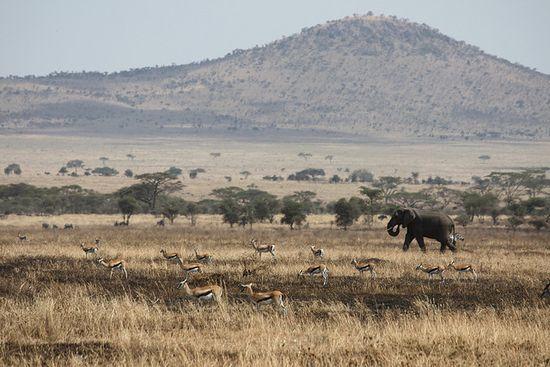 Pradera en el Serengeti