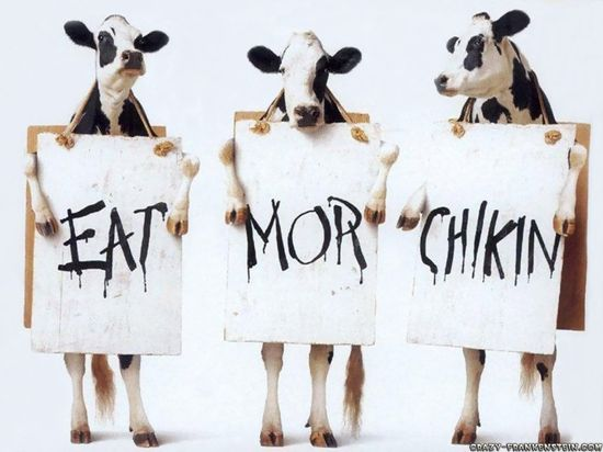 Cow-funny-ads-wallpapers