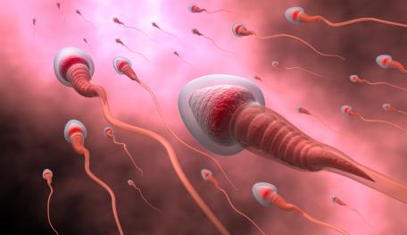 La Idealizada Imagen De Los Espermatozoides Humanos La Doctora Shora Blogs El País