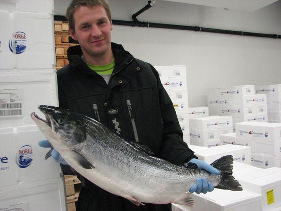 Operario con salmon