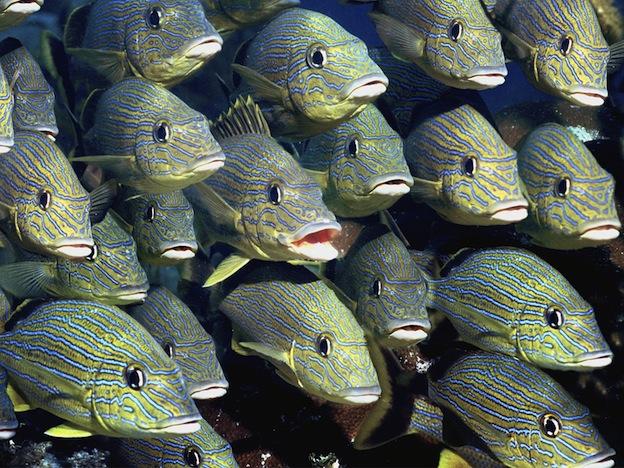 Cardumen-de-peces-936513
