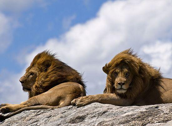 Serengeti4