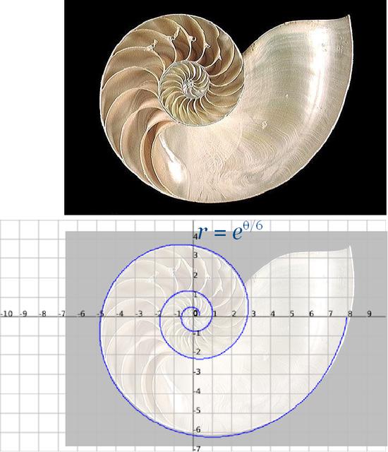 Nautilus log