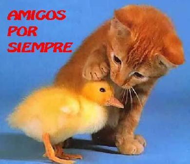 Amigos2