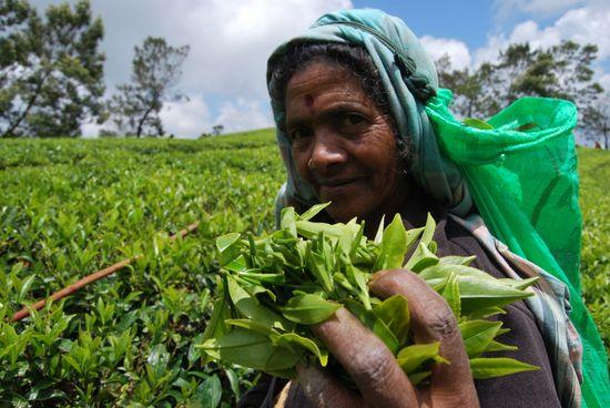 Una recolectora de té en Sri Lanka. / MÓNICA HERNÁNDEZ