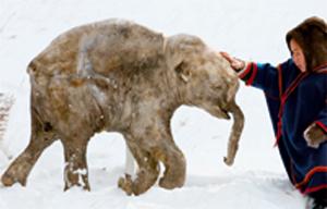Resultado de imagen de mamut lanudo congelado