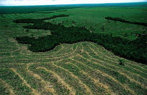 Cuenca-amazonas-deforestacion