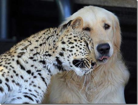 Cão_leopardo[7]