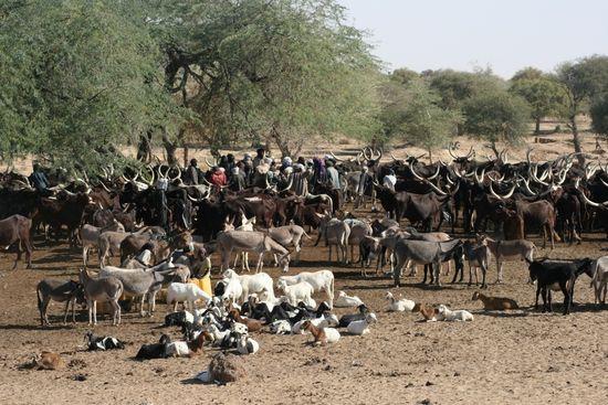Sahel1