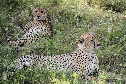 Paisajes del Serengeti 5