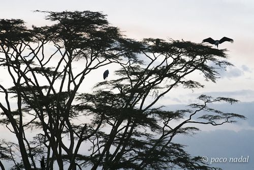 Paisajes del Serengeti 11