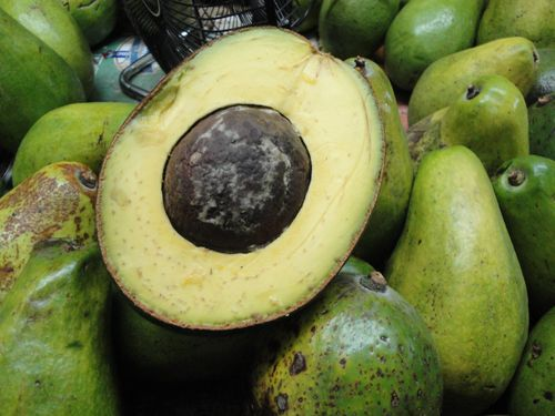 Aguacate gigante