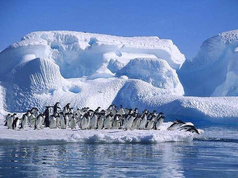 4. Antártida con pinguinos