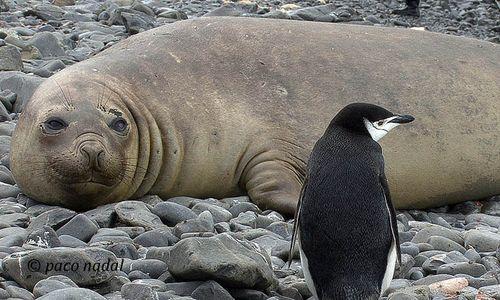Post pinguinos 5