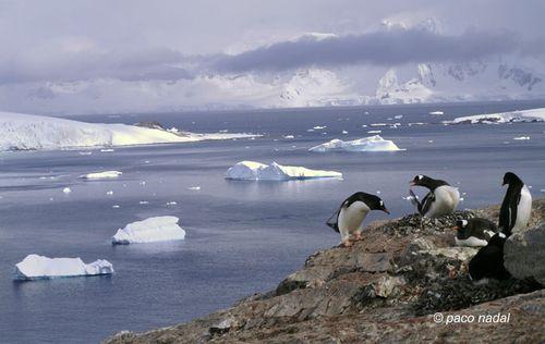 Antártida_13