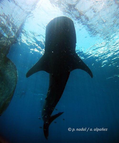 Tiburón para post 4
