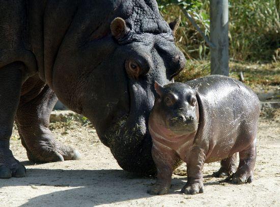 Zoo madrid Uly Martin