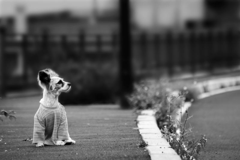Abandono-perros-animales-2