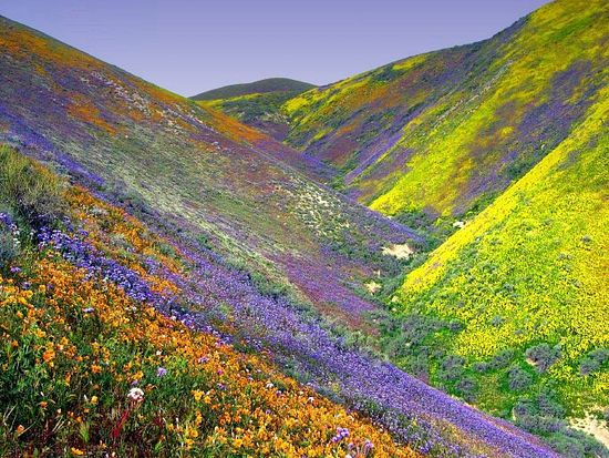 Vally-Of-Flowers_32