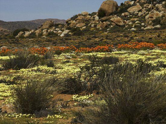 800px-Namaqualand,_Goegap_1003