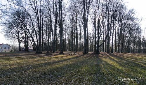 Bosque Chodovar 3
