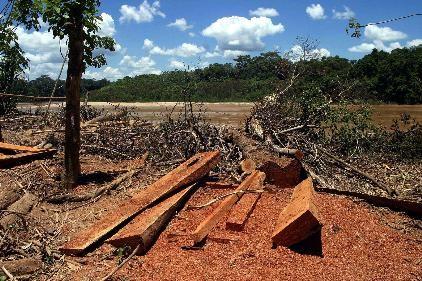 Amazonia destruida (3)