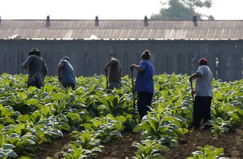 2011_US_farmworkers