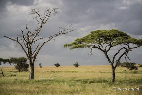 Paisajes del Serengeti