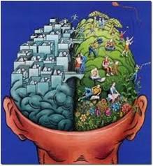 MASCULINIZANTE-Cerebro