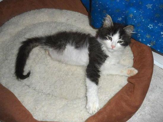 Gato con dos patas (2)