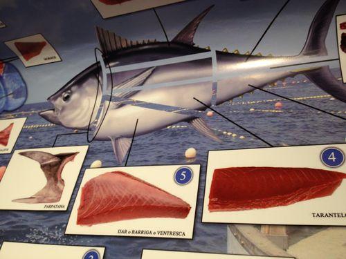 Cartel con despieces del atún rojo