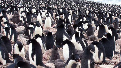 Post pinguinos 3