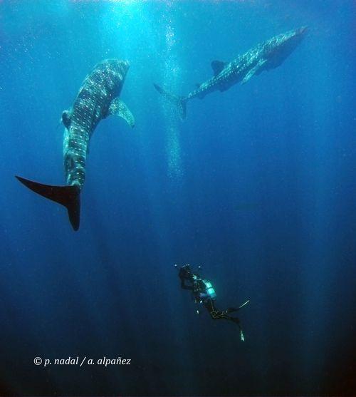 Tiburón para post 6