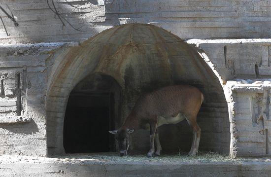 Carlos rosillo zoo madrid