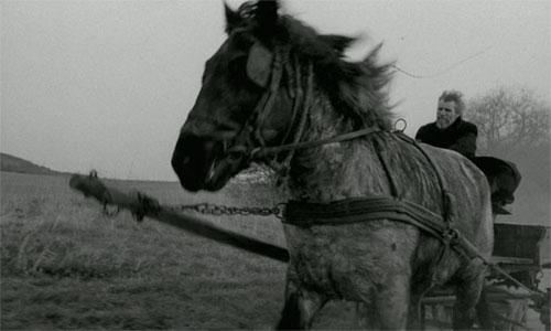 El caballo de turin 1