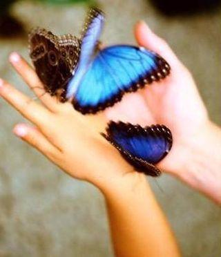 Manos de niña con mariposas