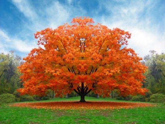Fuego en el árbol