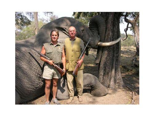 Un elefante foto del rey con elefante muerto