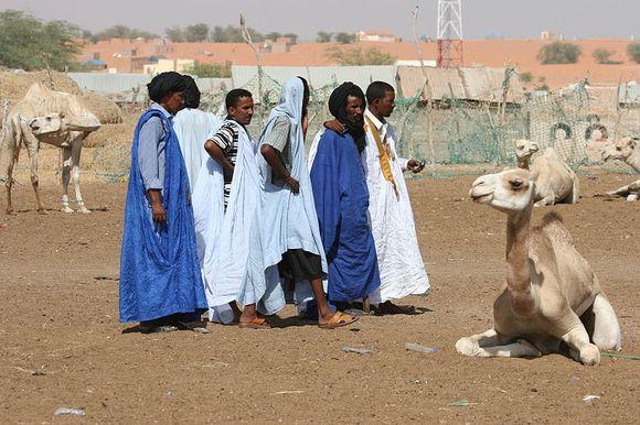 800px-Camelmarket_in_Nouakchott