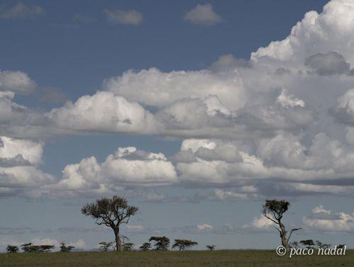 Masai Mari