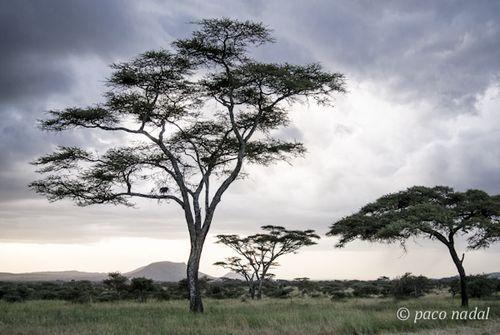 Paisajes del Serengeti 2