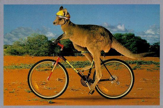 El casco obligatorio provocó un descenso del número de ciclistas en Australia